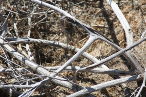 Cambria Branches